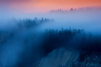 Misty Top Grand Canyon Yellowstone Trees Fog and Sunrise Light by Vincent James