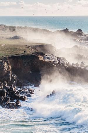 Misty Trail and Mighty Waves Sonoma Coast, California State Parks by Vincent James