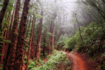 Misty Trail Through the Woods by Vincent James