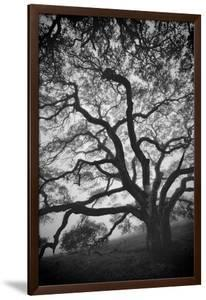Mood Tree, Oak in Winter in Black and White, Sonoma Couny, Northern California by Vincent James