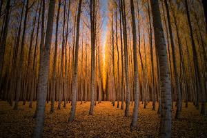 Moody Autumn Tree World, Northern Oregon, Boardman by Vincent James