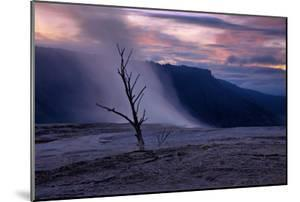 Moody Hot Springs Sunset Tree, Mammoth Hot Springs, Yellowstone by Vincent James
