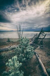 Moody Lakeside Storm, Yellowstone by Vincent James