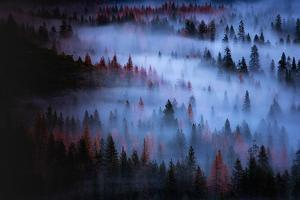 Moody Mesmer Fog & Light Trees Sark Yosemite Winter Storm Valley by Vincent James