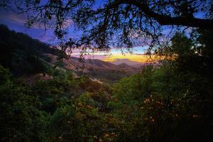 Moody Summer Wonderland at Sunrise Oakland Hills California by Vincent James