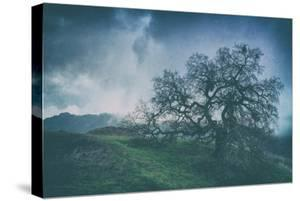 Moody Tree Landscape, Mount Diablo by Vincent James