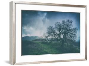 Moody Tree Landscape, Mount Diablo by Vincent James