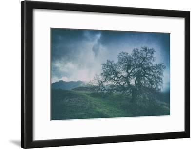 Moody Tree Landscape, Mount Diablo