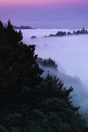 Morning Fog at Montclair Oakland Hills Bay Area Sunrise by Vincent James