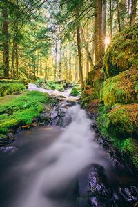 Morning Light at Panther Creek, Columbia River Gorge, Washington by Vincent James