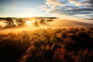 Morning Sun Break & Mist Hayden Valley Yellowstone National Wyoming by Vincent James