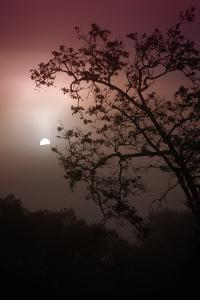 Morning Tree and Fog Silhouette by Vincent James