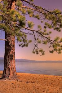 Morning Tree, South Lake Tahoe by Vincent James