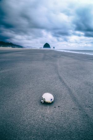 Morning Walk at Cannon Beach, Oregon Coast by Vincent James