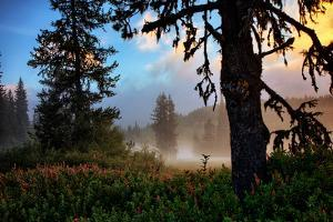 Mystical Meadow at Mount Hood, National Forest Oregon by Vincent James