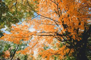 New England Fall Color Design - Boston Massachusetts by Vincent James