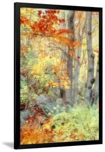 New England Fall Color Impressions by Vincent James
