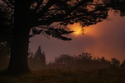 Oakland Sun & Fog Abstract Oak Tree Silhouette Montclair Hills East Bay by Vincent James