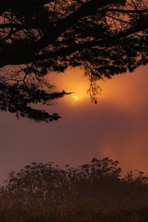 Oakland Sun & Fog Abstract With Trees Montclair Hills East Bay by Vincent James