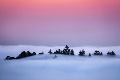Oakland Tree Tops Above the Fog Peaceful Morning Bay Area by Vincent James