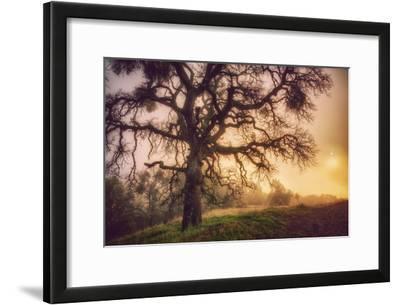 Old Oak, Sun and Fog, Mount Diablo