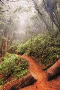 On the Misty Coast Trail at Muir Woods by Vincent James