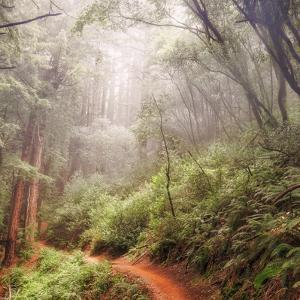 On The Misty Woods Trail by Vincent James