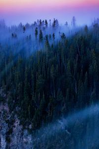 Overture Sweet Morning Symphony Fog Trees Grand Canyon Yellowstone by Vincent James