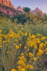Pa Rus Trail Scene, Zion Canyon by Vincent James