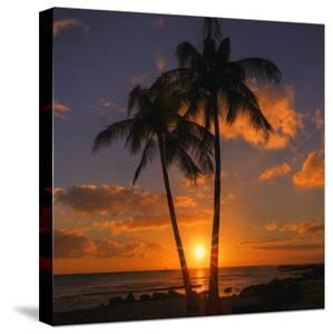 Palm Trees and Setting Sun (Square), Kauai Hawaii by Vincent James