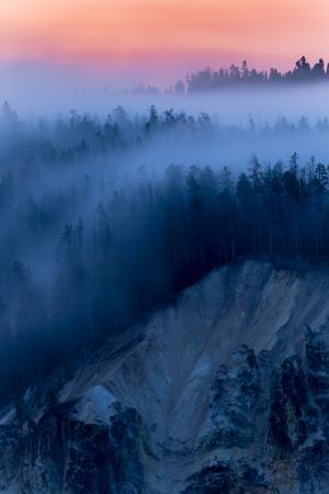 Peaceful Fog Flow & Sunrise Glow Trees Canyon Yellowstone Wyoming by Vincent James