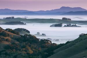 Peaceful Morning Mist and Fog Petaluma Sonoma California by Vincent James
