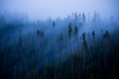 Peaceful Trees and Fog Flow & Sunrise Glow Trees Canyon Yellowstone Wyoming by Vincent James