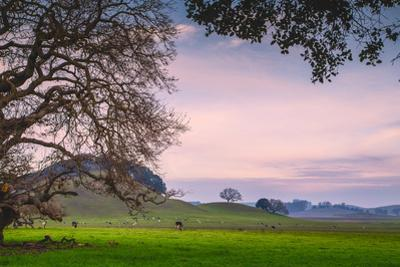 Petaluma Farm Scene, Sonoma County California by Vincent James