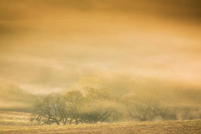 Petaluma Sun Light Tree Abstract Mist Powerful Gold California Country by Vincent James