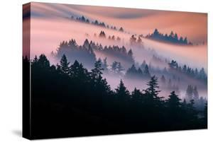 Pink Fog Flow, Sunset Mood and Flow, Marin County, San Francisco by Vincent James