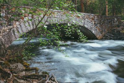 Pohono Bridge and Dogwoods, Yosemite National Park by Vincent James
