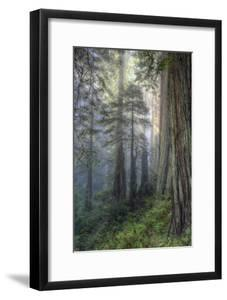 Precious Redwood Forest, California Coast by Vincent James