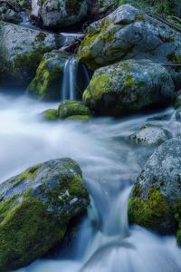 Precious Water, Alder Creek by Vincent James