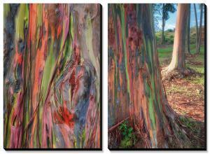 Rainbow Eucalyptus Detail, Hawaii by Vincent James