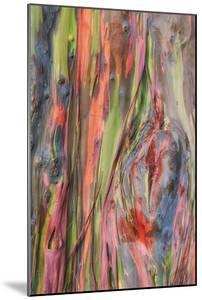 Rainbow Eucalyptus Detail, Kauai by Vincent James