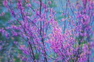 Redbud River Abstract by Vincent James