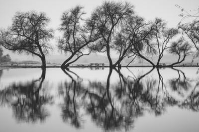 Reflection Dance, Trees of Marin, San Francisco Bay Area by Vincent James