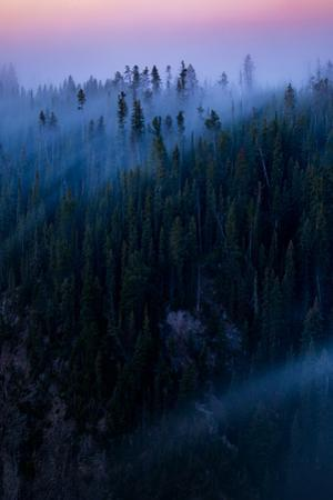 Relaxing Fog Flow & Sunrise Glow Trees Canyon Yellowstone Wyoming by Vincent James