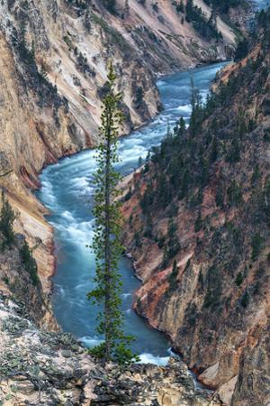 River Dreams Grand Canyon of the Yellowstone Unqure Detail Wyoming by Vincent James