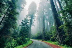 Road Through The Redwood Forest, Humboldt, Northern California by Vincent James