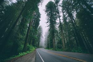 Road through the Redwoods, Del Norte Coast Redwoods, California by Vincent James