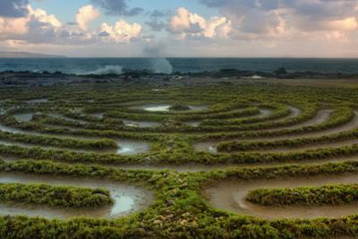 Scene at Kapalua Labyrinth Maui by Vincent James