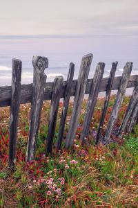 Sea Ranch Fence by Vincent James