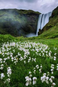 Skogafoss and Summer Wildflowers in the Morning Iceland by Vincent James